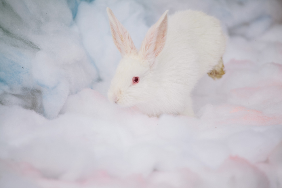 Пушистые кролики на свадьбу